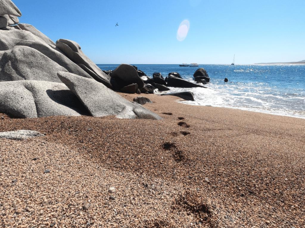 Footprints in Los Frailes Beach