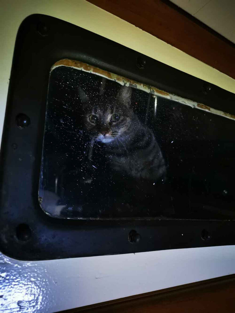 A cat looking through the window of our Kelly Peterson 44 bluewater cruiser sailboat
