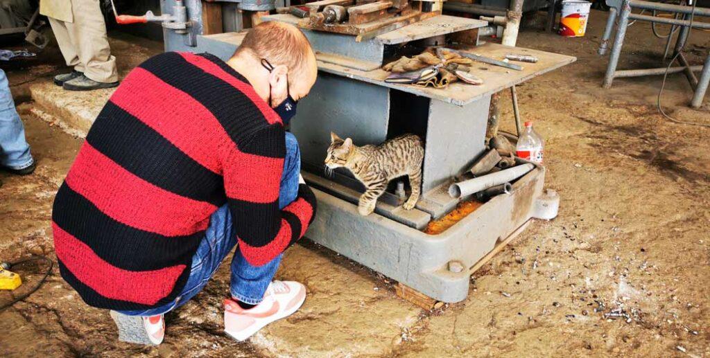 Dave se lie d'amitié avec le chat de l'atelier