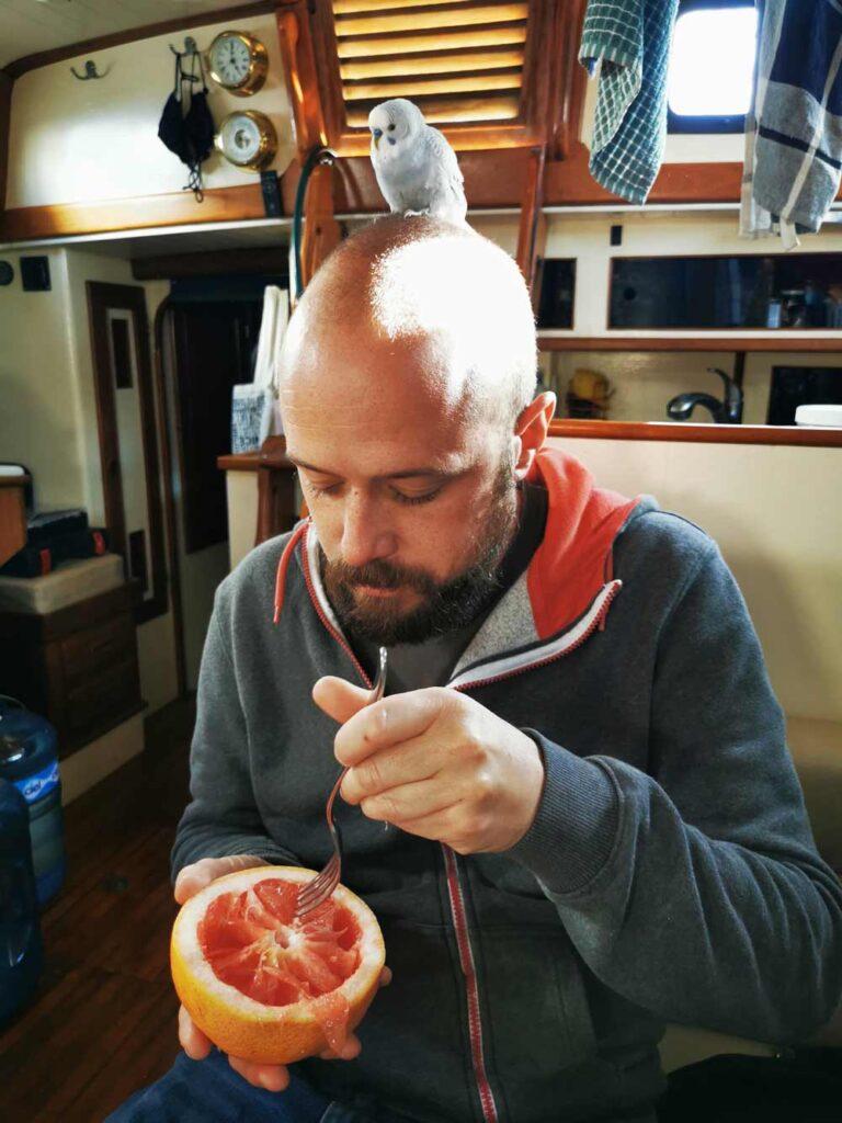 Dave, un pamplemousse et une perruche