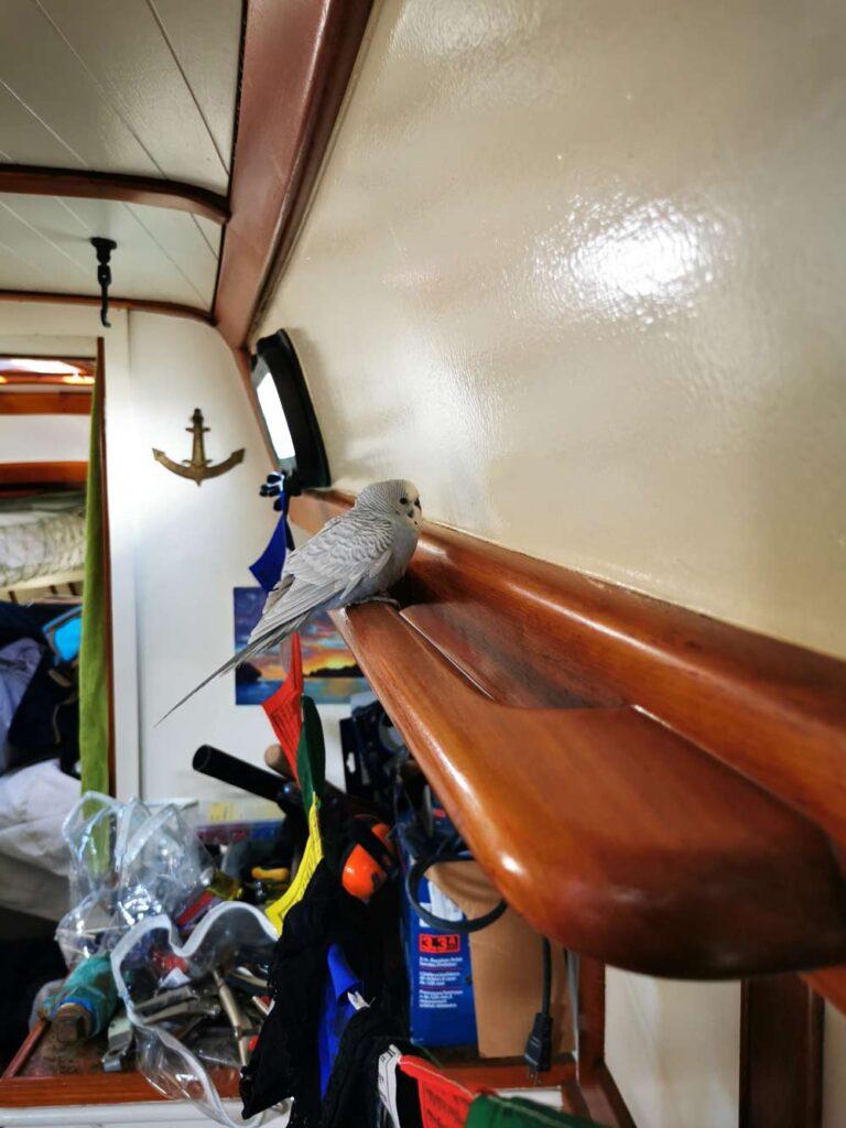 Perruche sur un bateau
