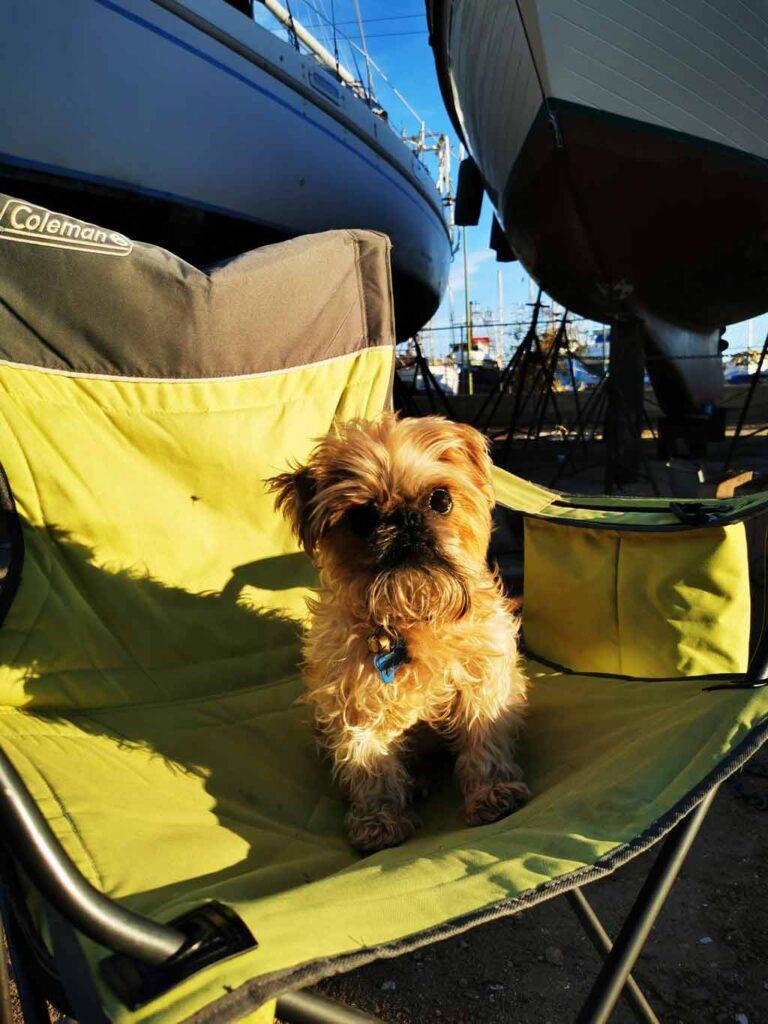 Chien mignon assis sur une chaise de camping à Cabrales Boatyard, Puerto Peñasco, Rocky Point