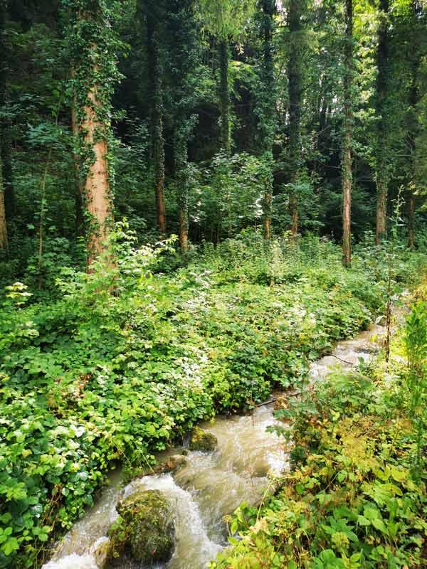 A stream in the forest in Aesch, Switzerland