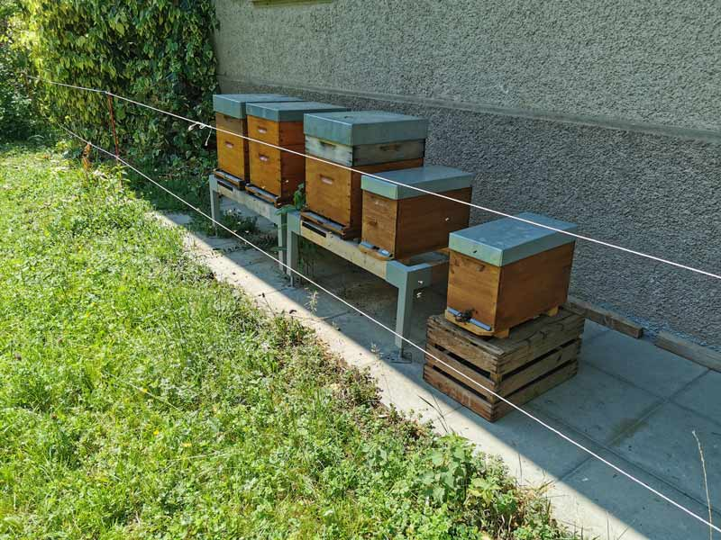 Bee hives