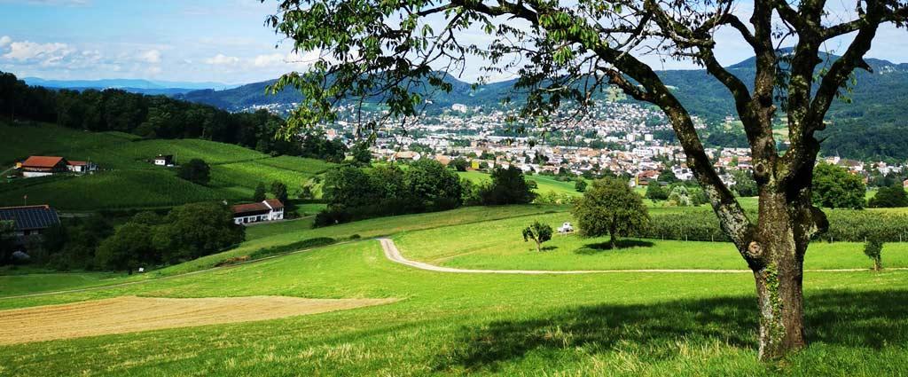Green fields in Aesch, Switzerland